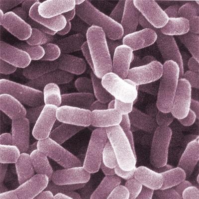 Bacterias para la salud