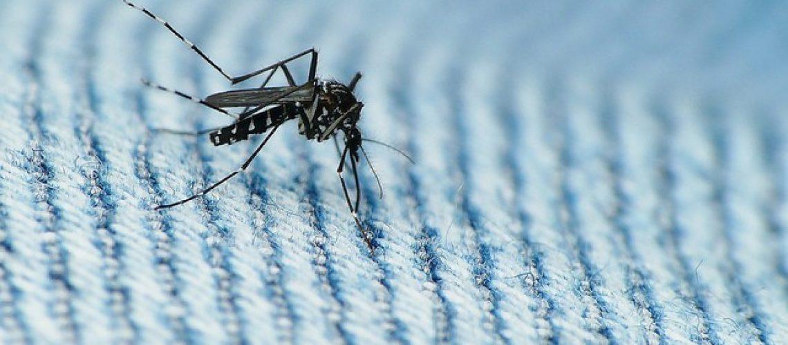 Zika mosquito F